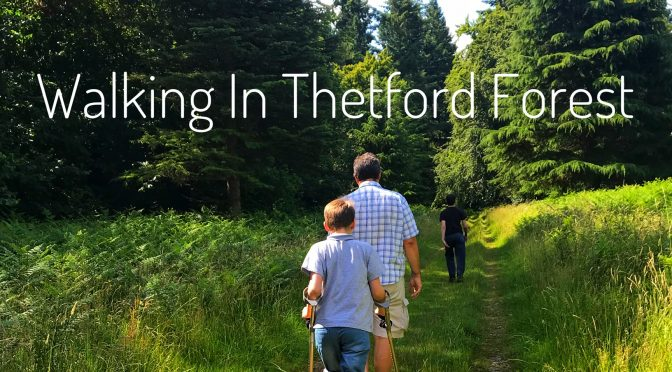 Walking In Thetford Forest